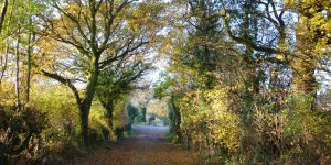 Photo of pathway with overhanging trees in Cossall village countryside