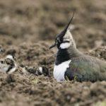 Image showing nesting birds