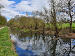 Image of Canal Willows